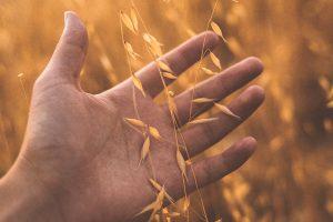 Lee más sobre el artículo El hermoso trabajo de los evangelistas